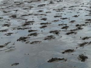 mudflat-hiking-57666_640