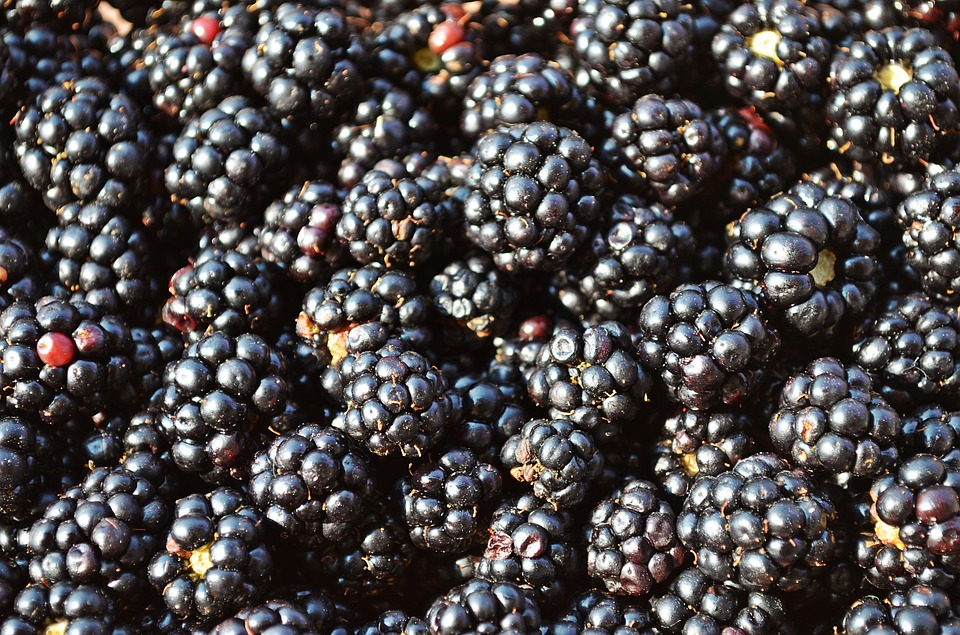blackberries-888228_960_720.jpg