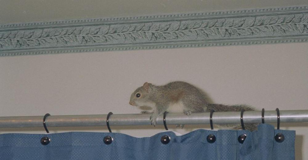 Squirrel in shower
