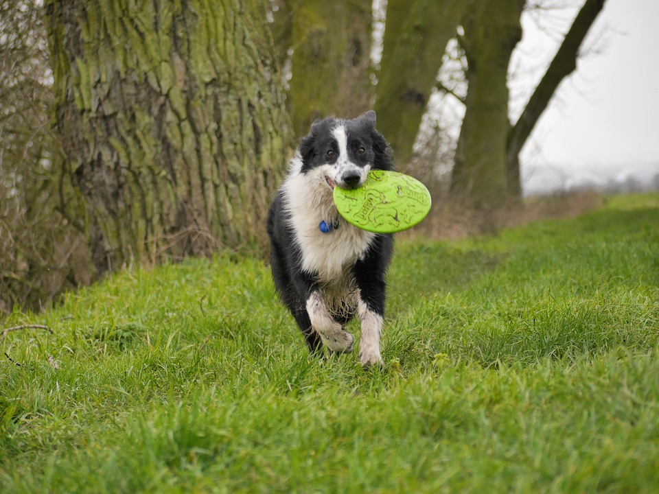 dog with frisbee.jpg
