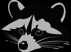 racoon-1296640_960_720