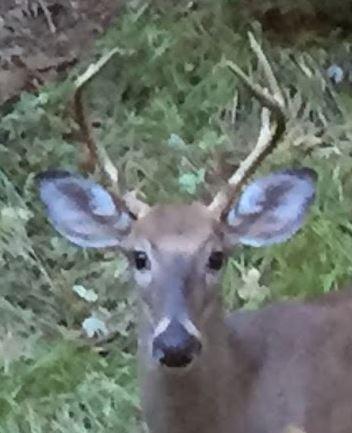 deer talk.JPG