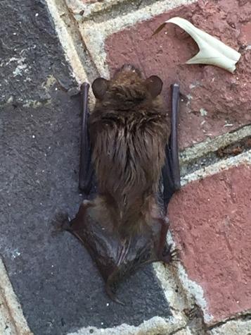 concussed bat 2