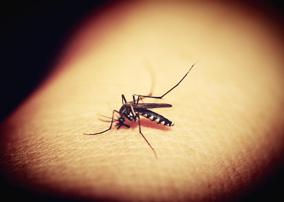 mosquitoe-