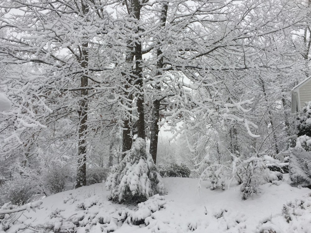 snow day 2018 (1).jpg