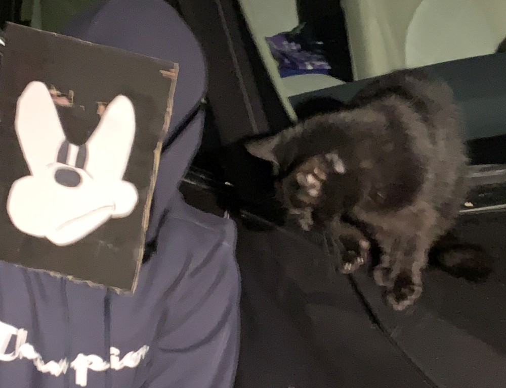 Chatted with a black cat on a car. Everyone loved that!